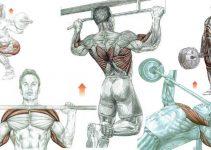 compound-exercises
