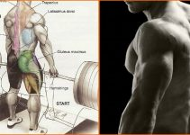back-exercises-for-muscle
