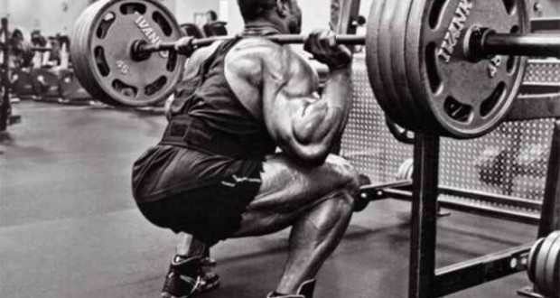 visual impact muscle building squats
