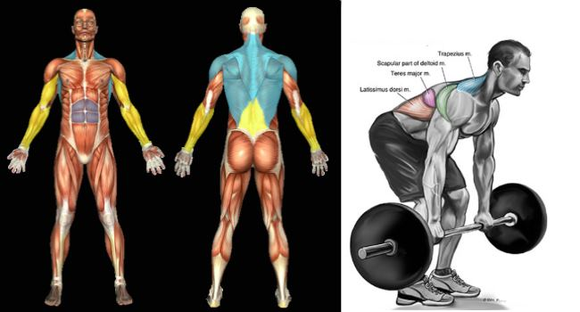 bent-over-barbell-rows