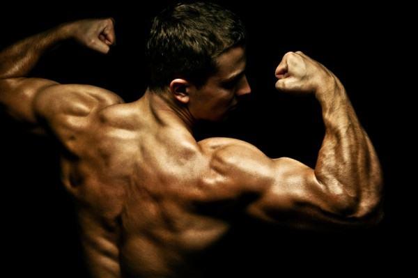 muscle_building_factors