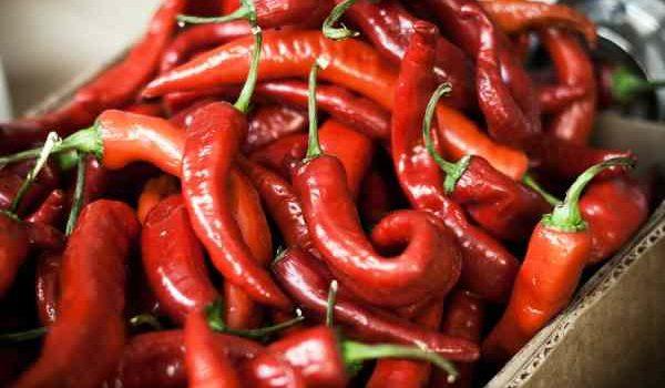 fat burning foods - capsaicin
