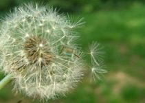 deal-with-spring-allergies
