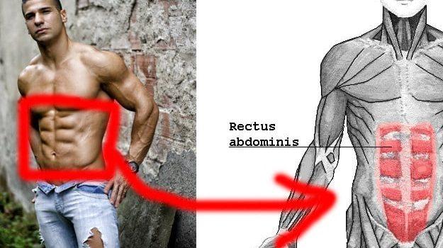 increase-metabolism
