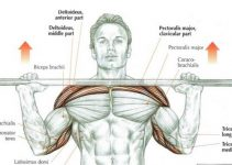 overhead-press-muscles