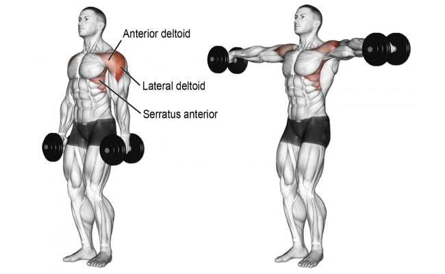 Three Of The Best Exercises For Building Massive Shoulders Fitness
