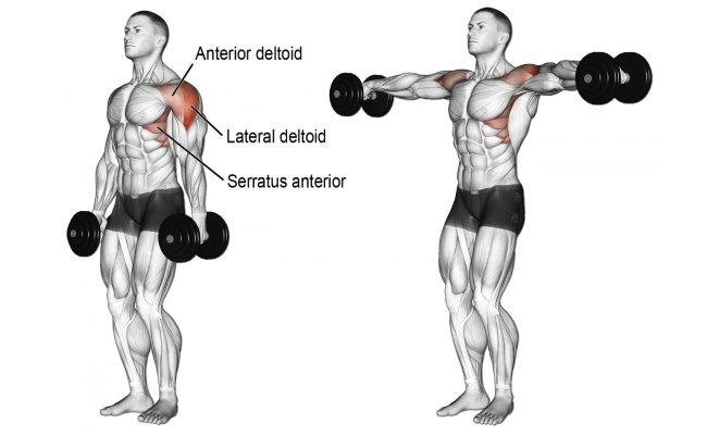 side-lateral-dumbbell-raises