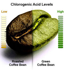 green coffee bean extract - Chlorogenic acid