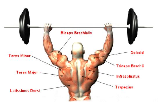the-benefits-of-the-standing-barbell-shoulder-press