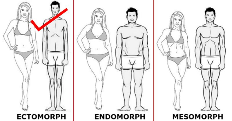 ectomorph build muscle