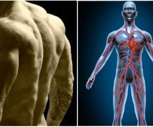 how-to-keep-your-muscle-mass-when-you-are-not-training