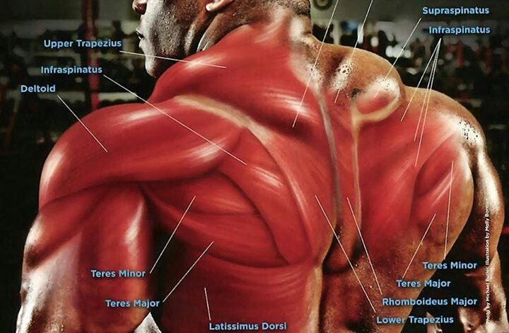 30 minute back workout