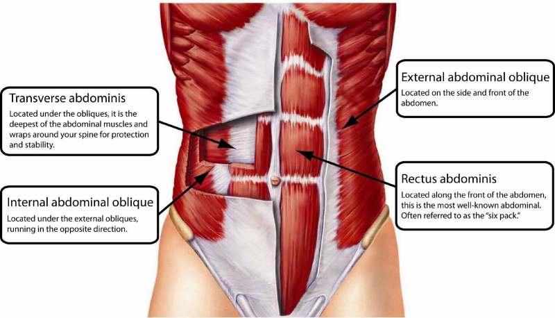 abdominal-anatomy