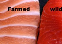 Farmed-Salmon-Is-FULL-Of-Antibiotics-and-Mercury-Here's-How-To-Tell-If-Your-Salmon-Is-Safe