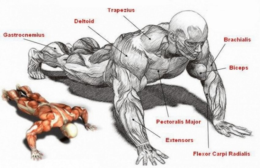 Bigger Arms With Pushups