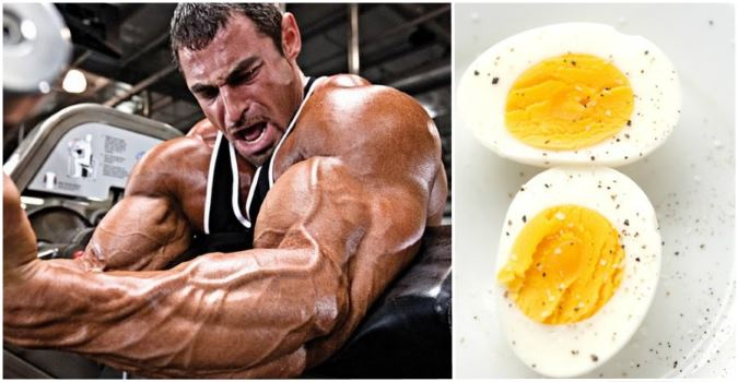 best-muscle-building-foods