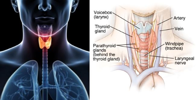 signs-your-thyroid-is-out-of-whack