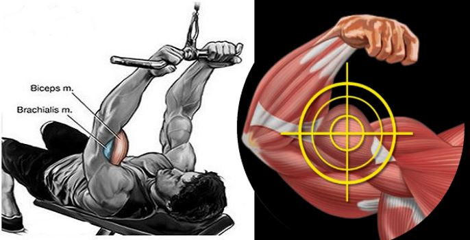 The Two Most Powerful Biceps Workouts - Fitness and Power
