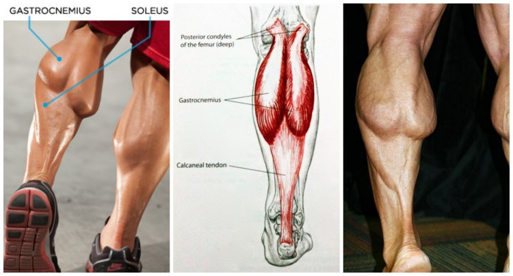 6-simple-moves-for-crafting-bigger-calves