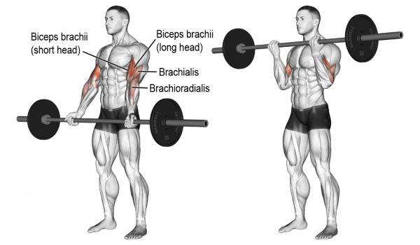 barbell-curls