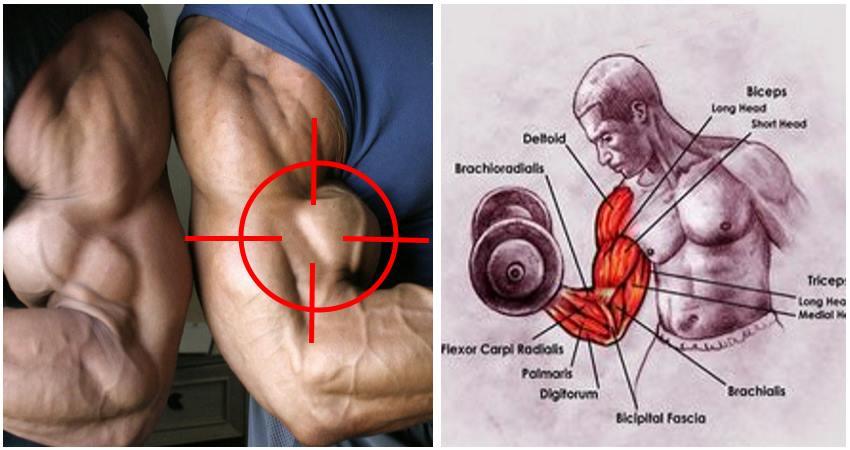 biceps-tips