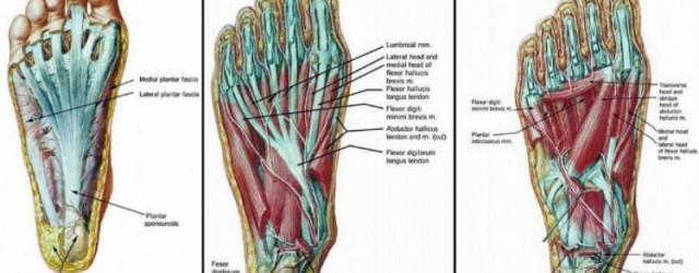 foot-exercises