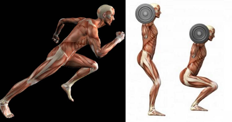 weights-are-better-than-cardio-for-fat-loss