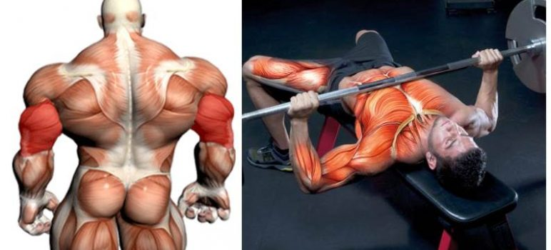 4-triceps-boosters-increase-your-max-bench