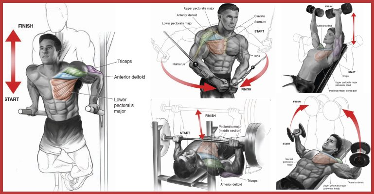 6 Must Do Moves For A Strong Chiseled Chest