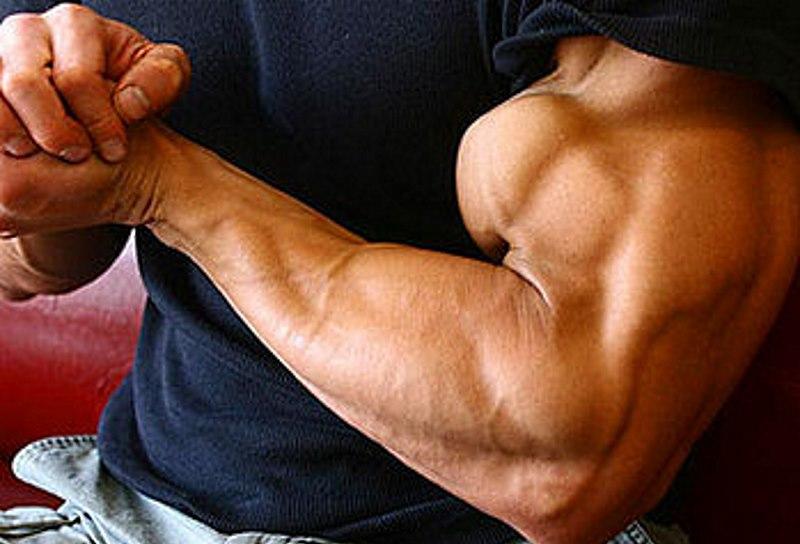 biceps-peaks