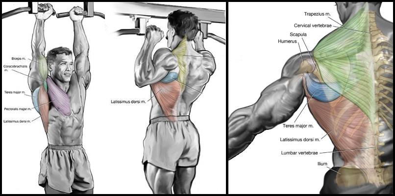 blast-your-upper-body-with-close-grip-pull-ups