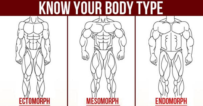 your body type - ectomorph, mesomorph or endomorph? - fitness and, Muscles
