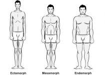 body-types-ectomorph-mesomorph-endomorph