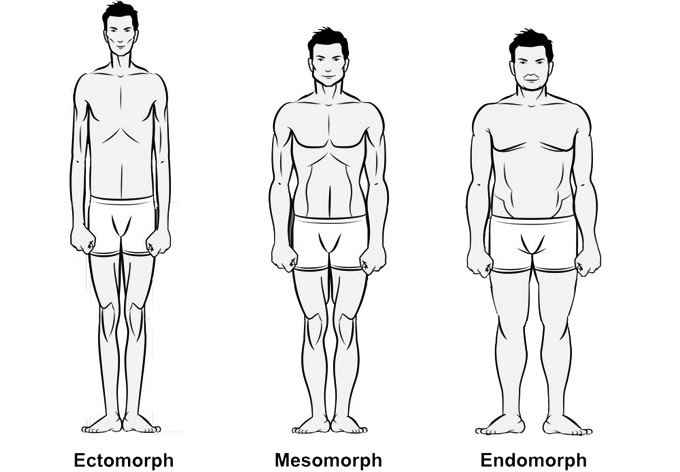 ectomorph training guide