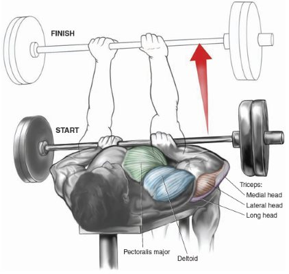 Triceps Building Routine