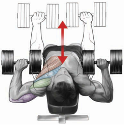 decline-dumbbell-press