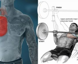 force-your-chest-to-grow