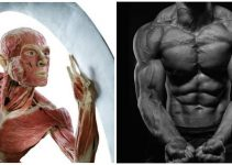 is-fasted-cardio-the-best-for-burning-fat
