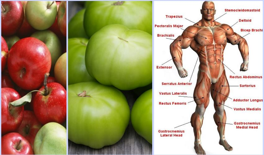 apples-green-tomatoes-muscle-growth