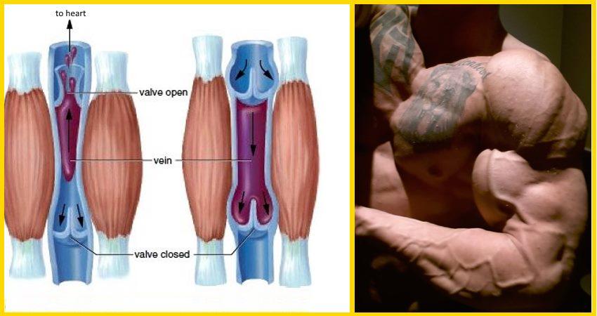 muscle-pump-water