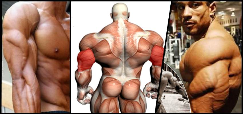 Image result for big triceps
