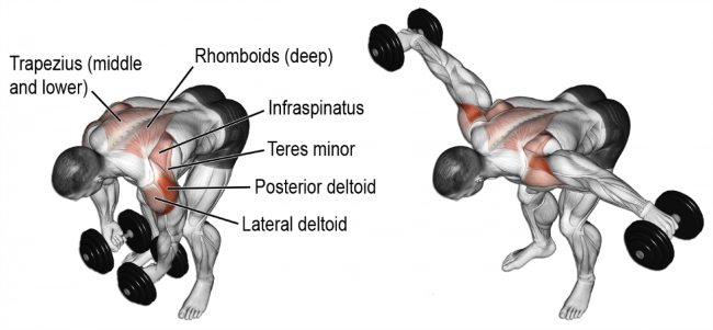 dumbbell-rear-lateral-raise