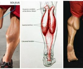the-best-calf-building-tips