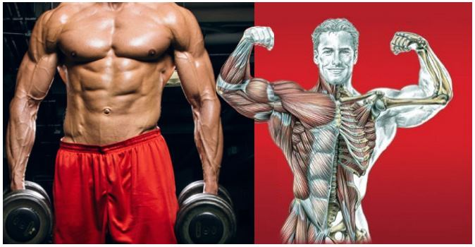 optimum-rep-speed-for-maximum-gains