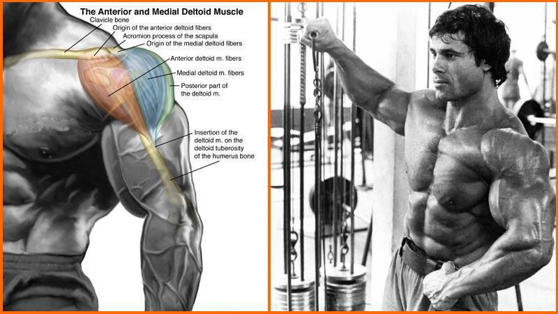 shoulder-cable-exercises