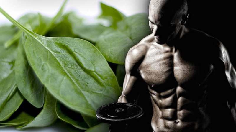 foods-for-fat-loss