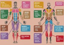 the-best-muscle-building-exercises-for-each-body-part