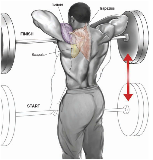 barbell-upright