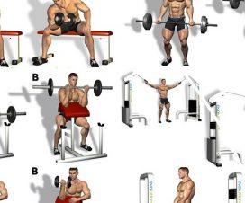 bicep-workout-program