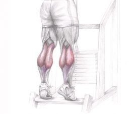 bring-up-your-stubborn-calves